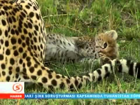 hayvanlar alemi belgeseli