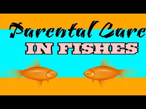 Parental Care In Fish |Complete Discussion| | With Full Notes|
