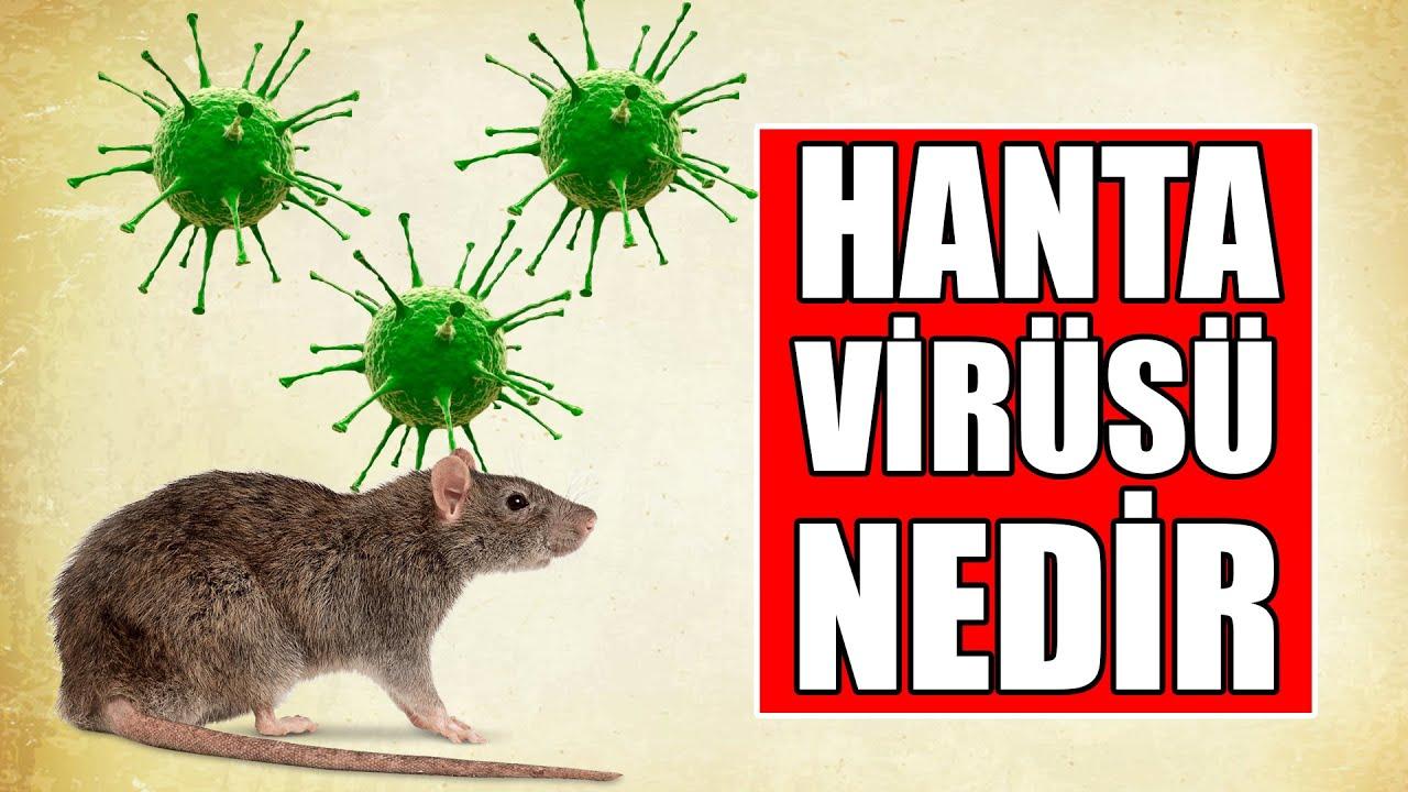 Hanta Virüsü Nedir ve Belirtileri Nelerdir ?