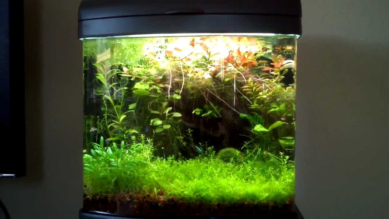 Planted 12 Gallon Freshwater Aquarium Youtube