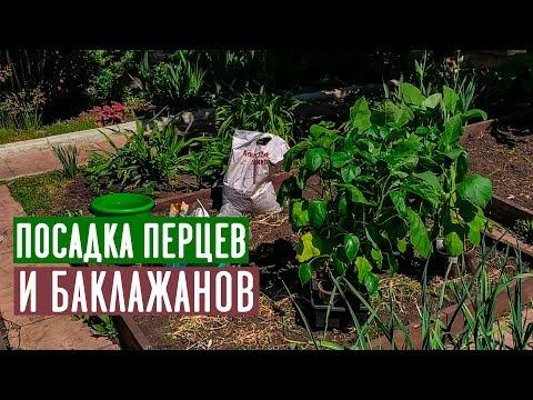 ПЕРЕЦ И БАКЛАЖАН 🍆 Посадка в открытый грунт / Садовый гид | проверенный | баклажанов | открытый | зарубина | баклажан | садовый | посадки | посадка | способ | лариса