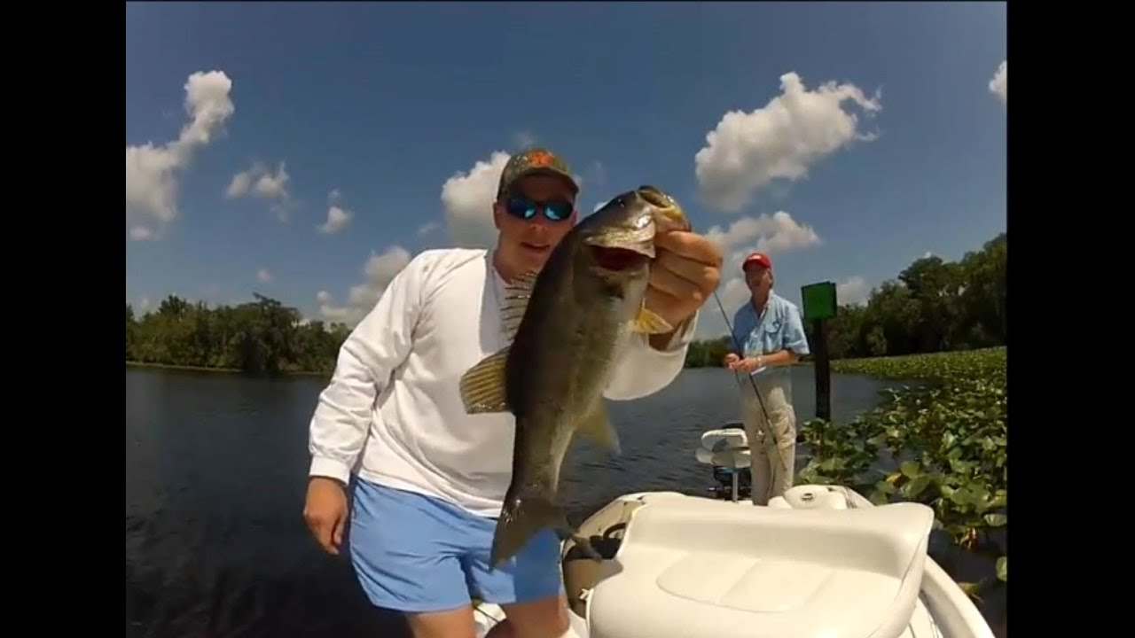 St johns river florida bass fishing youtube for Best bass fishing in florida