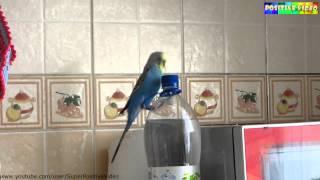 A parrot jumps. Попугай прыгает. Positive video.