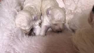 千葉県旭市にある愛犬の美容室ダンク 看板犬のサラちゃんのあかちゃんの...