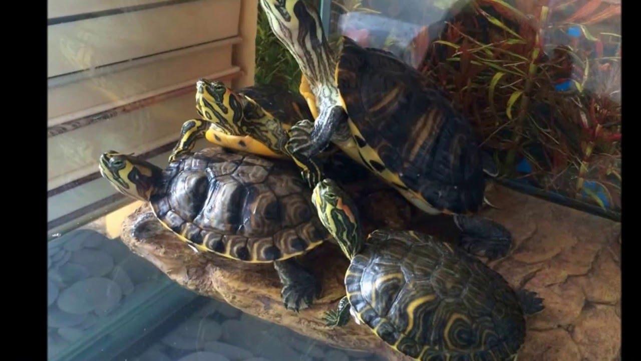 Nuova tartarughiera con quattro tartarughe youtube for Tartarughiera