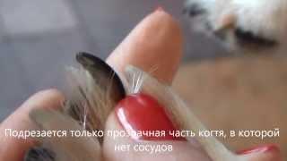 подрезание когтей собаке