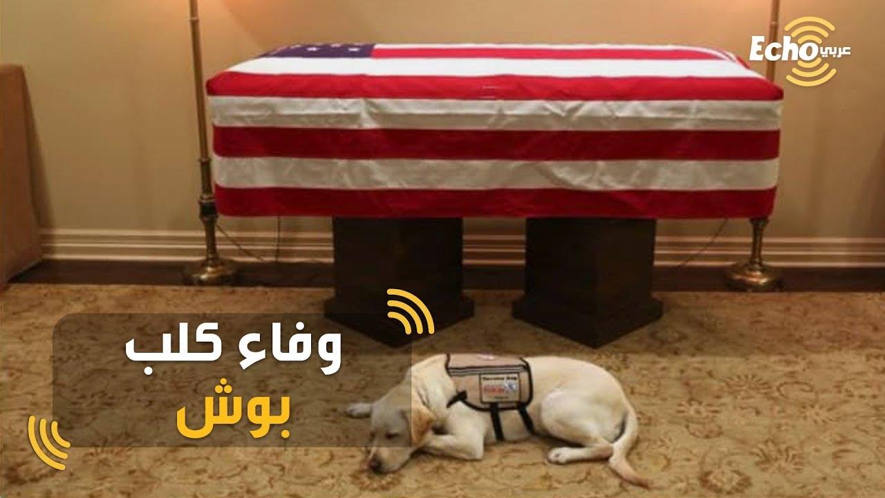 ردة فعل كلب الرئيس الامريكي بوش المتوفي في الجنازة؟
