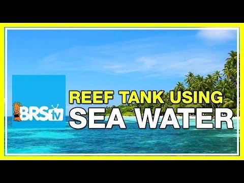 FAQ #36: Can I use ocean water in my reef tank? | 52 FAQ