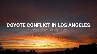 Coyote Conflict in Los Angeles - The UCANR Hazing Study (Documentary)