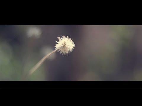tiny beauties of nature (Musical short film )   Nikon D5200