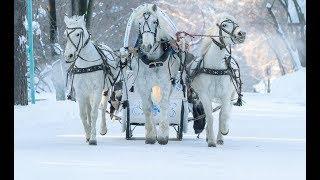 """Юлия Загоскина. """"Три белых коня"""". Е. Крылатов"""