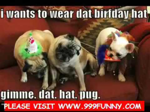 cats and dogs singing Christmas songs - YouTube