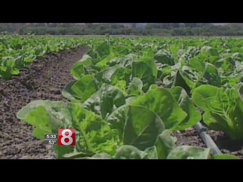 Sen. Richard Blumenthal calls on the FDA to institute a mandatory recall on romaine lettuce
