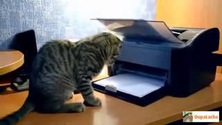 Свежие приколы с кошкам  прикольные видео с кошками  с животными 1