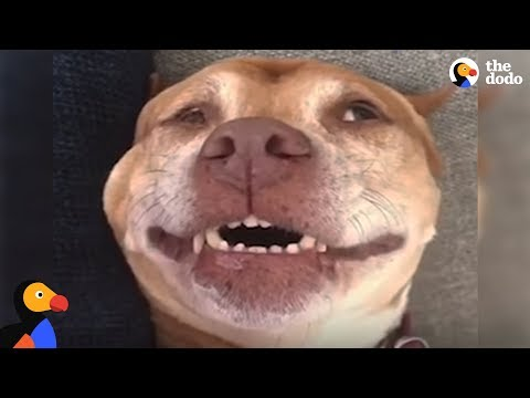Thumbnail: 'Wimpy' Pit Bull Dog Becomes The Happiest Dog After Adoption | The Dodo