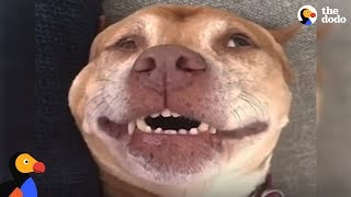 'Wimpy' Pit Bull Dog Becomes The Happiest Dog After Adoption | The Dodo