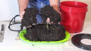 Amazing, grow in soil or coco coir at the speed of hydroponics.