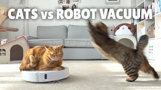 Cats vs Robot Vacuum | Kittisaurus