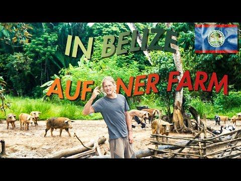 Arbeiten auf ner Farm in Belize VLOG | #422