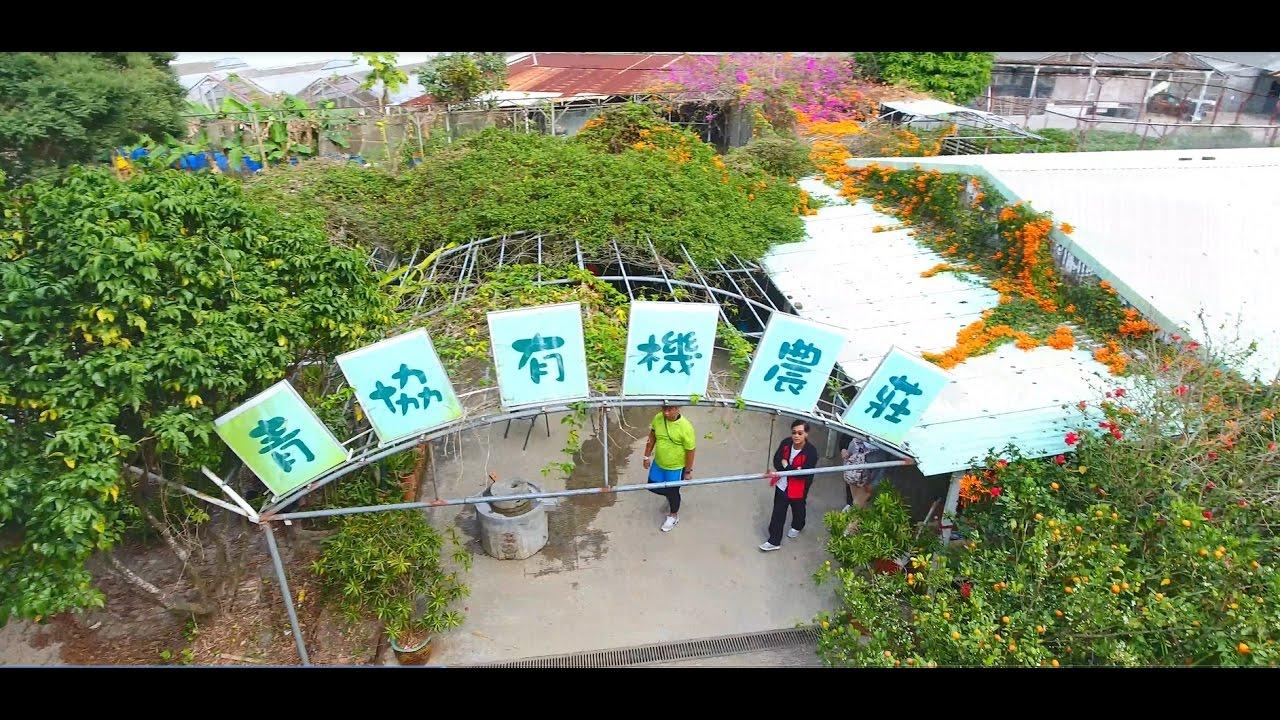 由元朗八鄉河背村行上青協有機農莊路線 - YouTube