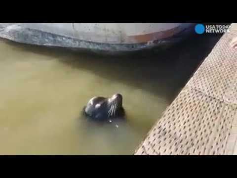 Parents of Girl Snatched by Sea Lion to Blame: Port Chief