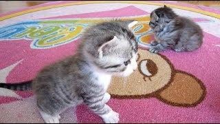 かわいい子猫 Cute kittens thumbnail