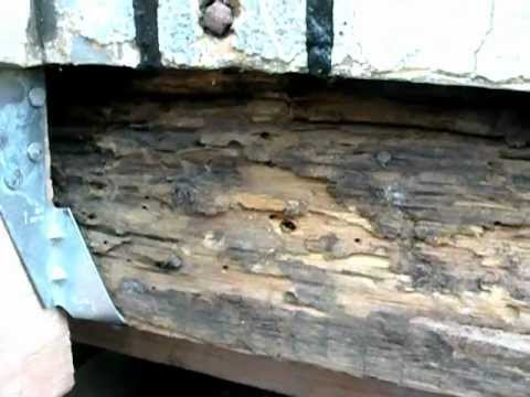 Home Inspection in Jersey City NJ Termite damages from Basement to Roof