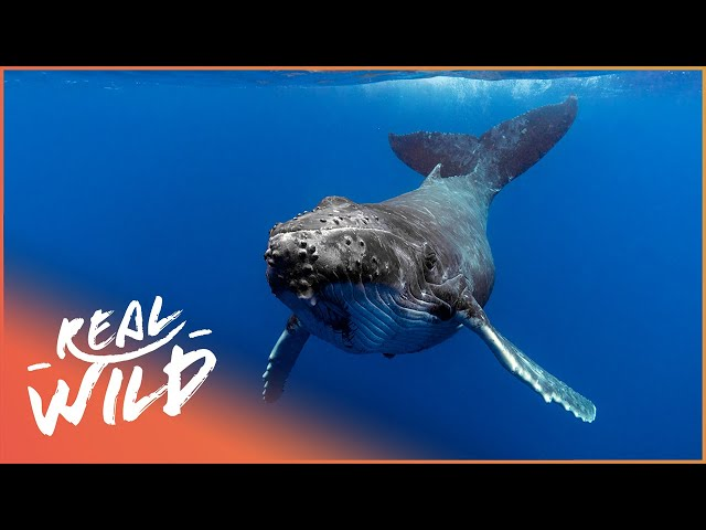 Getting Close To The Animals Of The Deep! | Ocean Adventurer | Real Wild Documentary
