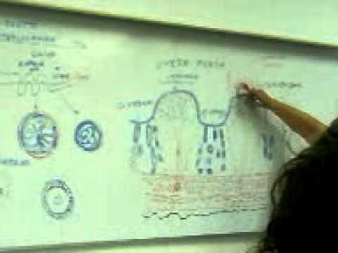 Histologia y Embriologia Veterinaria - UNAB - Útero de Oveja. - YouTube