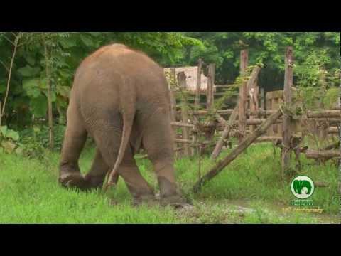Elephant Nature Park  10 Year Anniversary