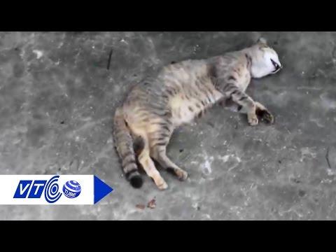 Rộ nạn bẫy mèo bán cho quán nhậu    VTC