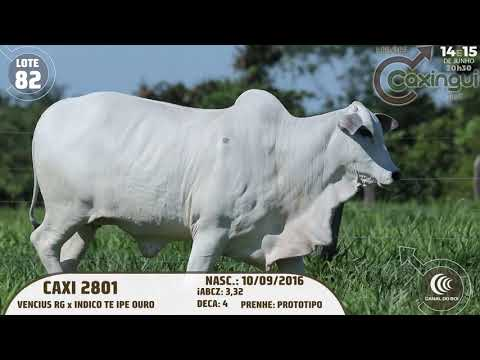 LOTE 82   CAXI 2801