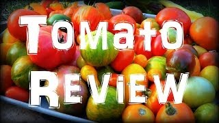 Tomato Review in the Summer Garden