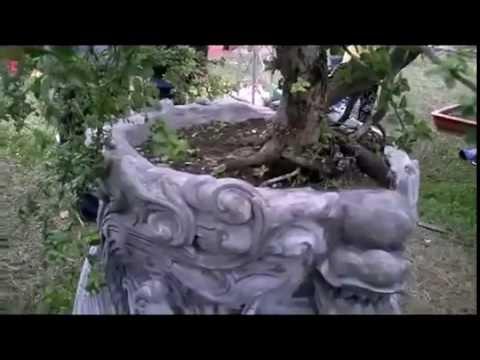 Tuyệt kĩ chậu cảnh  * alomua.vn, huongsacdatviet.com, tacphamvietnam.com