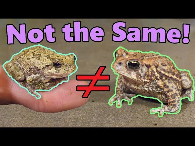 frogs-and-toads-what-s-the-difference