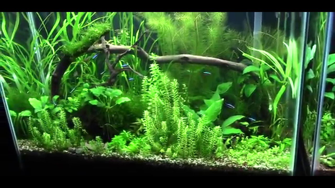 What substrate I use for my planted aquariums! Links in description ...