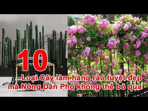 10 Loại Cây Xanh làm hàng rào tuyệt đẹp mà Nông Dân Phố không thể bỏ qua