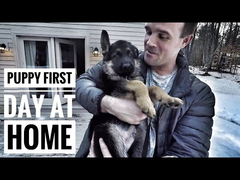 Cute Puppy - first day at new home