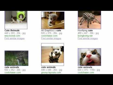Search stories: Animal mistreatment