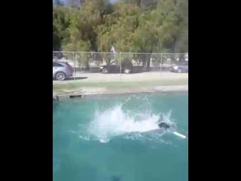 Phoenix, dock diver in the making