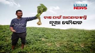 A New Way Of Potato Farming In Nimapara Known As Zero Tillage Potato Cultivation , Know Details