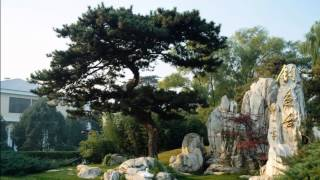 The Voice Of Buddha (Eyes Of Truth) [Pt. 2 Dalai Lama Tribute] - Bhangralution  HD