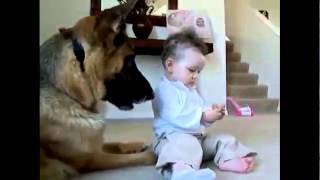 Dog Vs Child