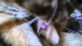 Прикол Кот изврашннец которий любит анонизм