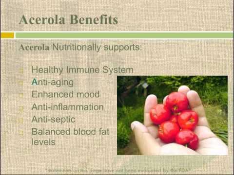 Acerola Cherries Acerola Berry Health Benefits & Vitamin C