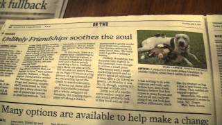 """Book """"unlikely Friendships"""". Cat, Chicks And Dog Pit Bull Sharky In Houston Chronicle July 5, 2011"""