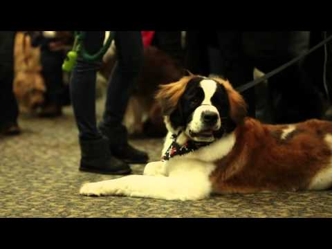 Dog Lovers Days- The Best Events for Dog Lovers #ad