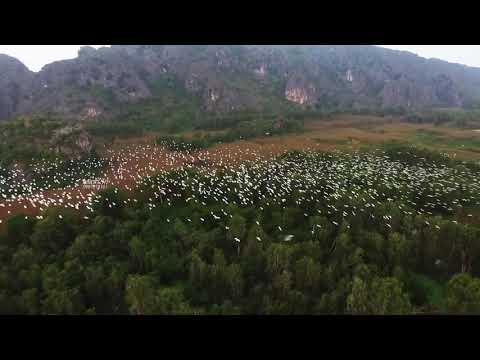 Đàn Cò Trắng Tuyệt đẹp Tại đầm Vân Long, Ninh Bình