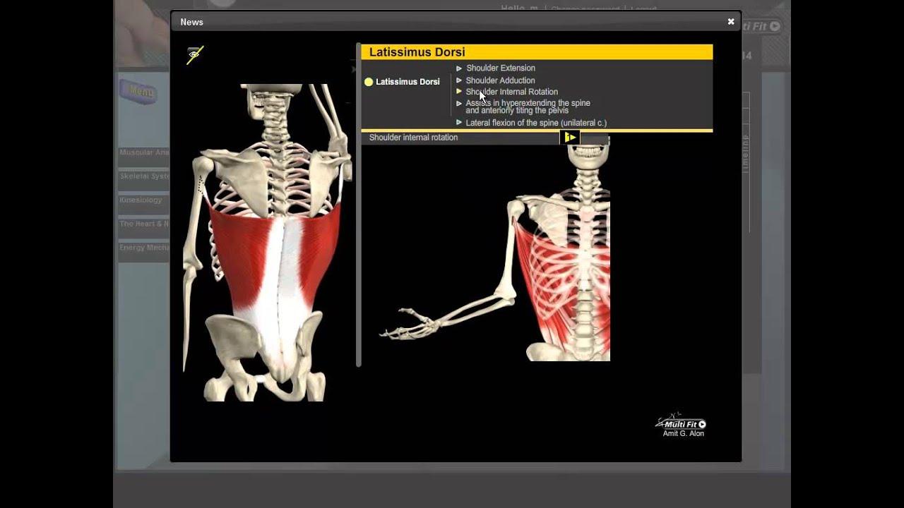 Latissimus Dorsi Anatomy - YouTube