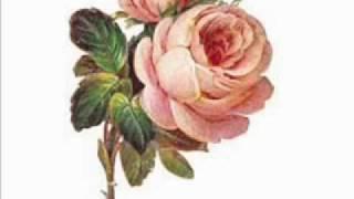 Baixar A Rosa - Uma homenagem às mulheres